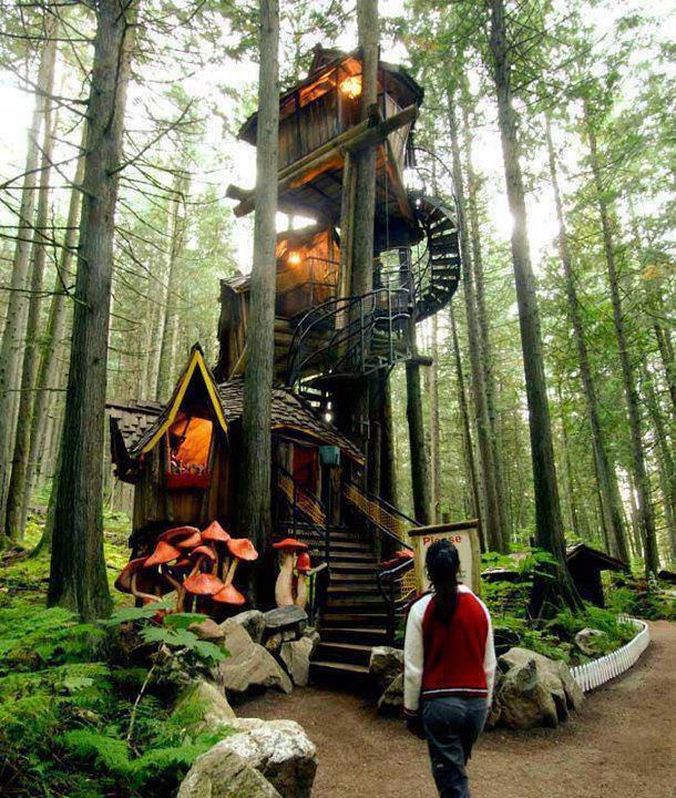 A Magic Tree House, hidden in the forrest
