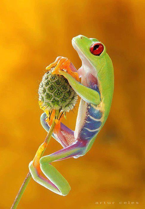 Beautiful Colorful tree frog