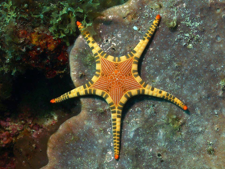 amazing starfish!!